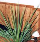 Planches de bois décoratives